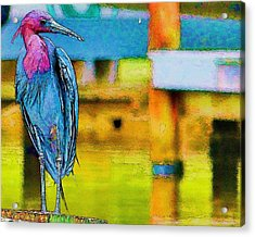 Acrylic Print featuring the photograph Little Blue Heron Posing by Pamela Blizzard