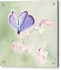 Little Blue Acrylic Print