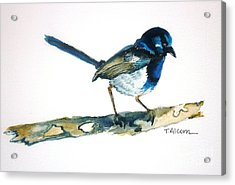 Acrylic Print featuring the painting Little Blue Wren - Original Sold by Therese Alcorn
