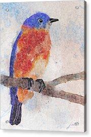 Little Bluebird Acrylic Print by Joan A Hamilton