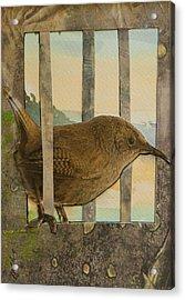 Little Brown Bird Acrylic Print