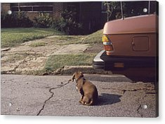 Little Brown Dog Acrylic Print by John Hines