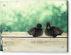 Little Buddies Acrylic Print by Amy Tyler