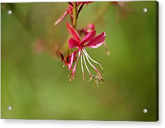 Little Bug On The Tip Of A Flower Acrylic Print