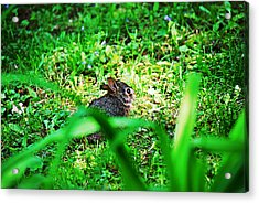 Little Bunny Fufu Acrylic Print by Mark Russell