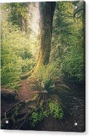Little Creek Acrylic Print by Alexander Kunz
