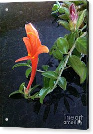 Little Dancing Dolphin Plant Acrylic Print by Brenda Brown