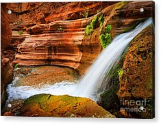 Little Deer Creek Fall Acrylic Print