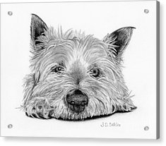 Little Dog Acrylic Print by Sarah Batalka