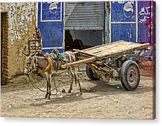 Little Donkey With Cart Acrylic Print