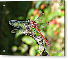 Little Dragonfly Acrylic Print by Morag Bates