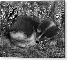 Little Dreamer Acrylic Print by Miki Krenelka