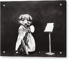 Little Fiddler Acrylic Print by Aged Pixel
