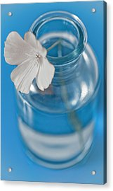 Little Flower In A Vase Acrylic Print