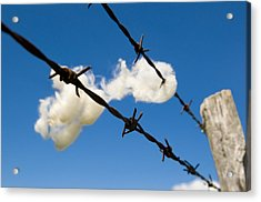 Little Fluffy Clouds 1 Acrylic Print