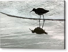 Little Footsteps Acrylic Print by Dan Holm