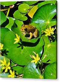 Little Frog Acrylic Print