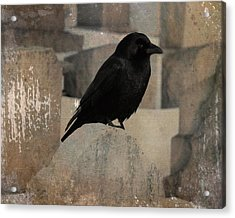 Little Gothic Crow  Acrylic Print by Gothicrow Images