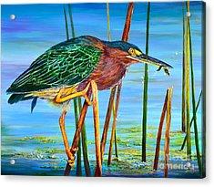 Little Green Heron Acrylic Print by AnnaJo Vahle