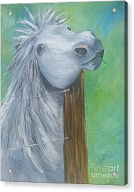 Little Grey Has An Itch Acrylic Print