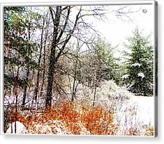 Little January  Acrylic Print by Dianne  Lacourciere