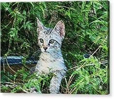Acrylic Print featuring the photograph Little Kitten by Kathy Churchman