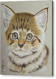 Little Kitty Acrylic Print