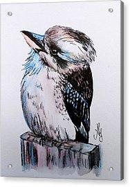 Little Kookaburra Acrylic Print