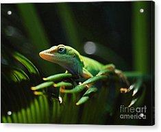 Little Lizard On A Sago Palm Acrylic Print by Kathy Baccari