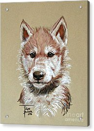 Little Lobo Acrylic Print