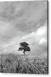Little Lone Oak Tree Acrylic Print