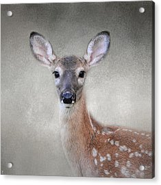 Little Miss Lashes - White Tailed Deer - Fawn Acrylic Print