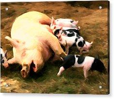 Little Piggies Acrylic Print by Michael Pickett