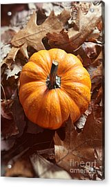 Acrylic Print featuring the photograph Little Pumpkin In A Bunch Of Leaves by Sandra Cunningham