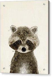 Little Raccoon Acrylic Print by Bri B