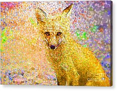 Little Red Fox Acrylic Print by Claire Bull