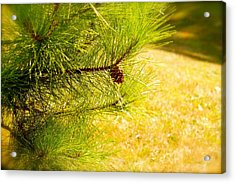 Little Seed Big Energy  Acrylic Print by Danielle  Broussard