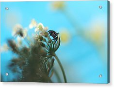 Little Spider Acrylic Print