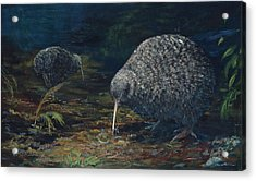Little Spotted Kiwi Acrylic Print by Peter Jean Caley