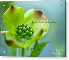 Little Things Acrylic Print by Irina Wardas