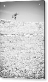 Little Tree On The Hill - Black And White Acrylic Print by Natalie Kinnear