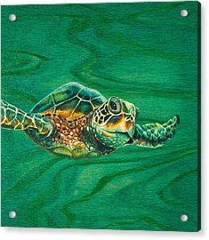 Little Turtle Acrylic Print by Emily Brantley