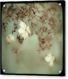 Little White Flowers - Floral - The Little Things In Life Acrylic Print