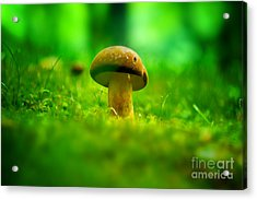 Little Wild Mushroom On A Green Forest Patch Acrylic Print