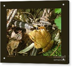 Little Yellow Frog Acrylic Print