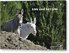 Live And Let Live Acrylic Print by Cheryl McClure