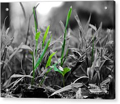 Live Green Acrylic Print by Jai Johnson