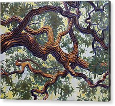 Acrylic Print featuring the painting Live Oak by Andrew Danielsen