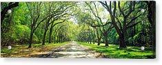 Live Oaks And Spanish Moss Wormsloe Acrylic Print