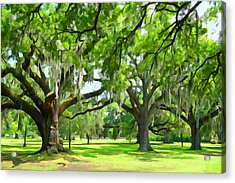Live Oaks - Audubon Park New Orleeans Acrylic Print by Dana Sohr
